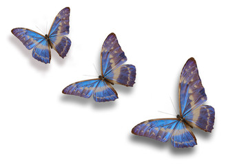 butterfly series two