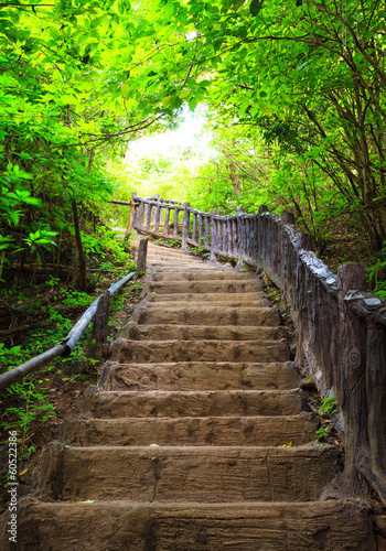 Stairway to forest - 60522386