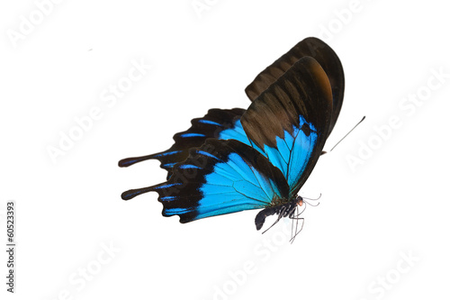 Tuinposter Vlinder Color butterfly flying, isolated on white