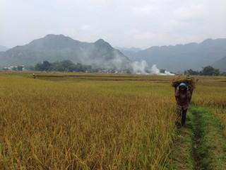 Mai Chau farm land
