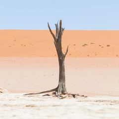 Dead acacia trees and red dunes of Namib desert