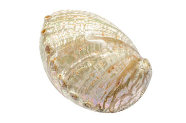 Pearl Abalone Haliotis shell on white background