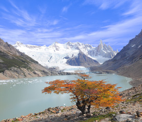 Tree by laguna Torre and Cerro Torre mountain.