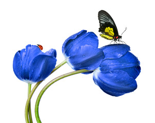 Dewy blue tulips with butterfly and ladybug