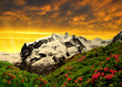 Beautiful mount Monte Rosa in the sunset - Swiss Alps