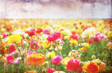open view of flowers field with textured vintage effect.