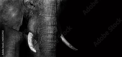 Aluminium Zuid Afrika Elephant (creative edit)