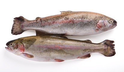 Isolated photo of two fresh whole trout