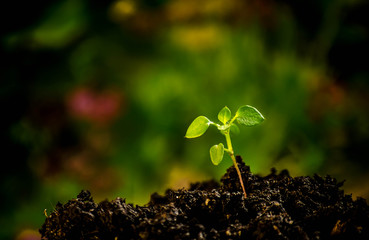Green seedling growing from the soil