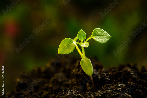 Green plant growing from the soil