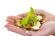 Geld und Pflanze. Symbolfoto Sparen