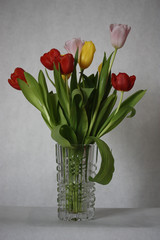 Fresh Tulips in a Vase
