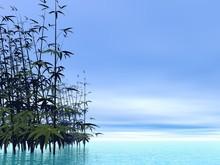 Bambous - 3D