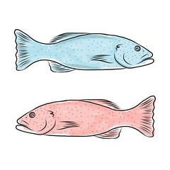 Fish sketch for your design