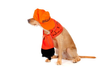 A brown dog, ready to support the Dutch soccer team!