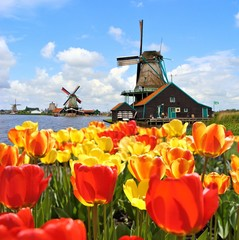 Dutch windmills with tulips at Zaanse Schans, Netherlands