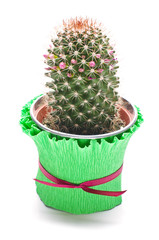 Cactus in the flowerpot