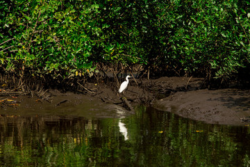 bird in tropical river