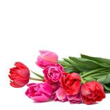 Fototapety Tulpen vor weißem Hintergrund