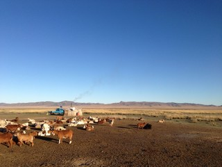 Mongolia nomads house and cattle