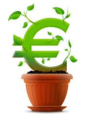Growing euro symbol like plant with leaves in flower pot