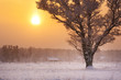 lonely tree in snowfall in early morning