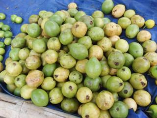 Guava Fruit market