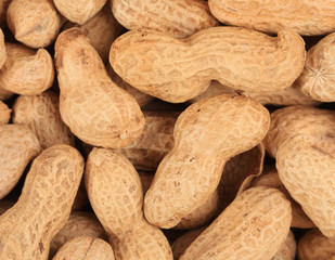 Close up of peanuts bunch.