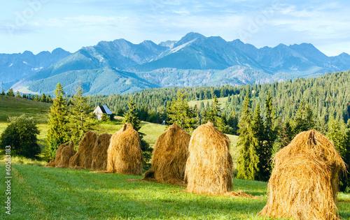 Fototapeta Summer mountain country view