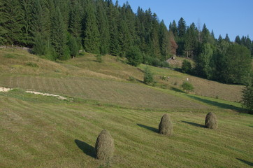 sheaves of hay during a beautiful day in Transylvania