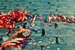 canvas print picture - Celebration