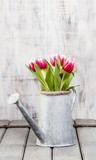 Fototapety Bouquet of pink and red tulips in silver watering can