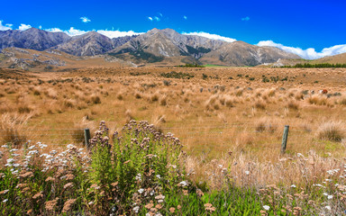 Grass field with rock and mountain background, New Zealnd