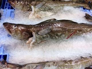 Bacalao fresco en pescaderia comida