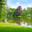 lake in the summer park