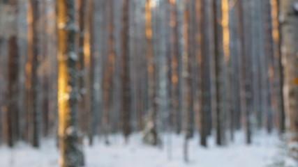 Winter landscape.Winter scene .