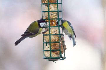 great and blue tits on feeder