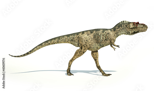 Albertosaurus Dinosaur, photorealistic representation, side view
