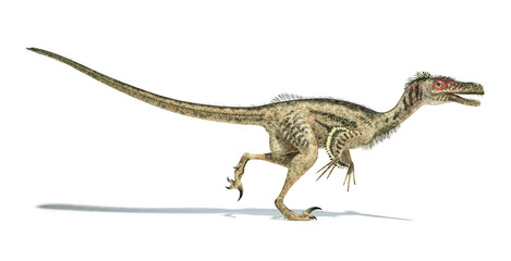 Velociraptor dinosaur, scientifically correct, with feathers.