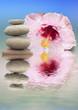 composition aquatique relaxante, galets et hibiscus