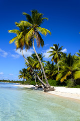 Dominicana beach with palms
