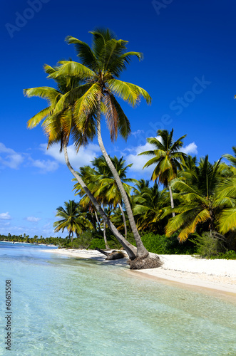 Dominicana beach with palms