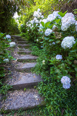 Path - Stairs with flowers, La Réunion