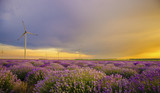 Sunset over lavender field with wind turbine