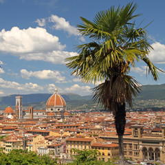 view of Florence with palm tree at foreground