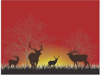 Gece ormanda geyik sürüsü