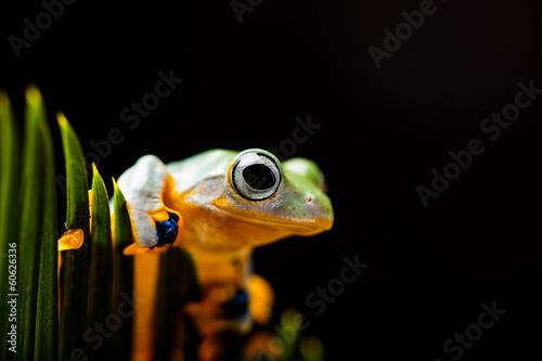 Foto op Canvas Kikker Colorful jungle theme with frog, vivid colors