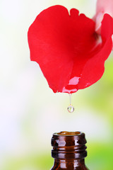 Drop falling from rose petal on natural background