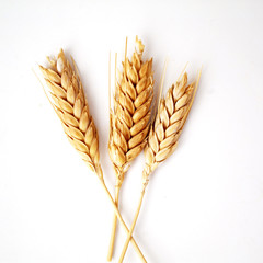 Wheat ears on white background
