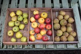 apples and pears in wooden trays